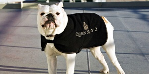 cunard-kennel-qm2-bulldog-770